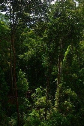 Malaysia: Taman Negara jungle