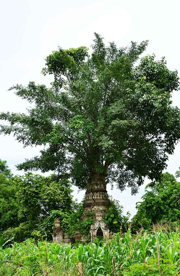 Burma, Hsipaw, Paya
