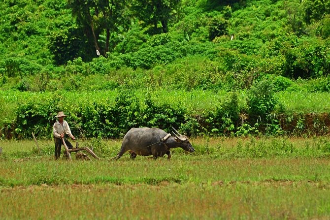 Burma, Hsipaw, plough