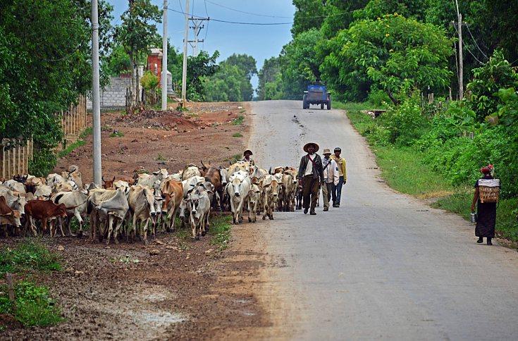 Shan, Burma, Myanmar, Inle Lake, herder