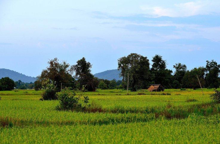 Laos: Dong Khong Island rice fields