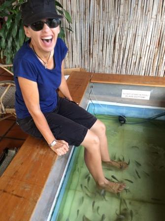 Siem Reap, Cambodia, fish tank