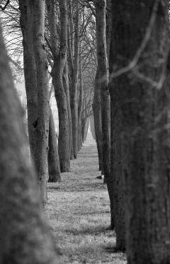 Treelined street: Klaipėda