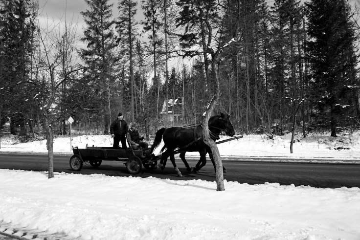 zakopane, poland, horse and cart, B&W photo