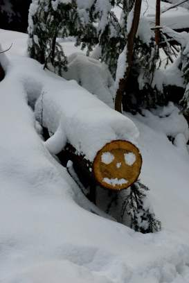 snow, face on log, zakopane, poland