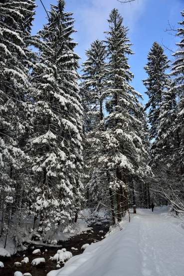 tatras, poland, zakopane, europe, snow scene
