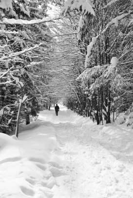 zakopane, poland, trekking, snow, tatras