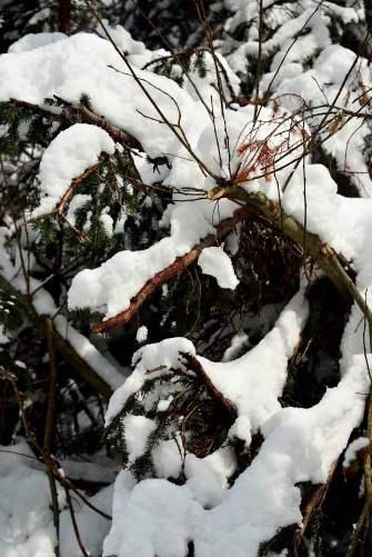 zakopane, poland, tatras, snow, mountains, treks