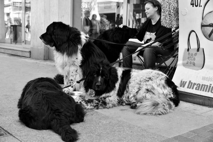 poznan, poland, dogs