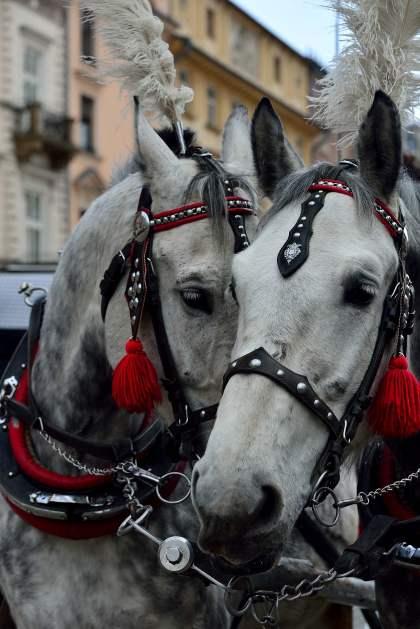 old town, poland, krakow, horses