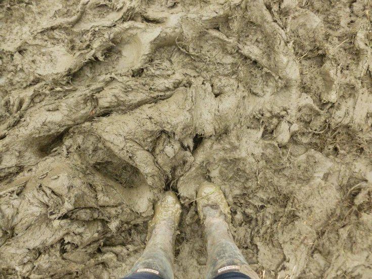 Glastonbury Festival, mud, England, music