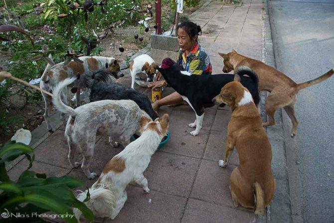 Khao Lak, stray dogs, Thailand