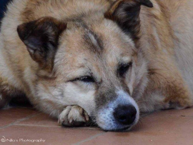 Rogliano, Calabria, Italy, dog