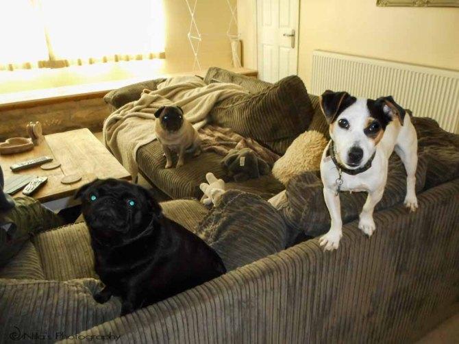 dogs, Weymouth, Dorset, England, United Kingdom