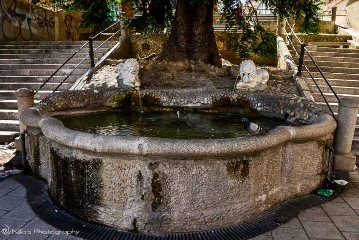 Scalata dei Leoni, Cosenza, Calabria, Italy