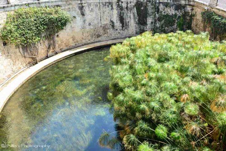 Arethusa, Ortigia, Syracuse, Sicily, Italy