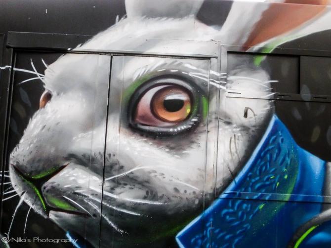 Bunny, Cosenza, Calabria, Italy