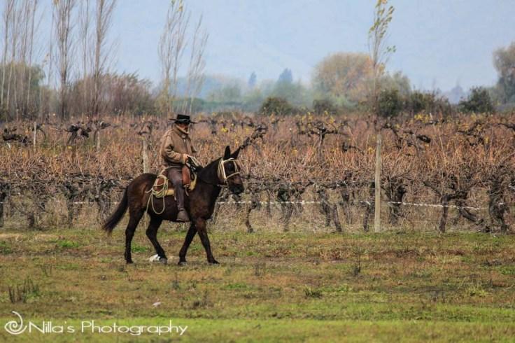 horseman, Viña Laura Hartwig, Santa Cruz, Chile, South America