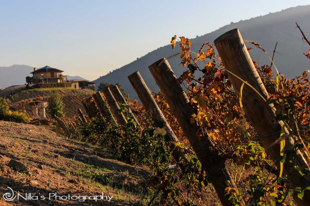 Chilean Wine Tasting, Santa Cruz