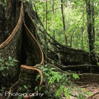 Jungle Trekking in Bolivia's Remote Amazon: Madidi National Park