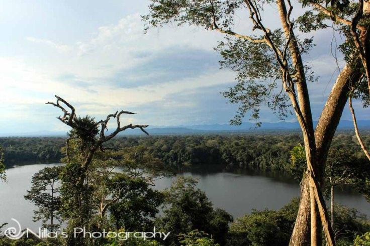 Madidi National Park, Amazon, Bolivia, South America