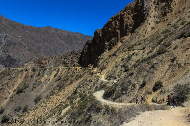 Colca Canyon, Arequipa, Peru, South America