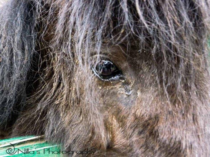pony, Le Manche, Rogliano, Calabria, Italy, Europe