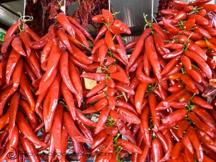Chillies, Roseto Capo Spulico, Calabria, Italy, Europe