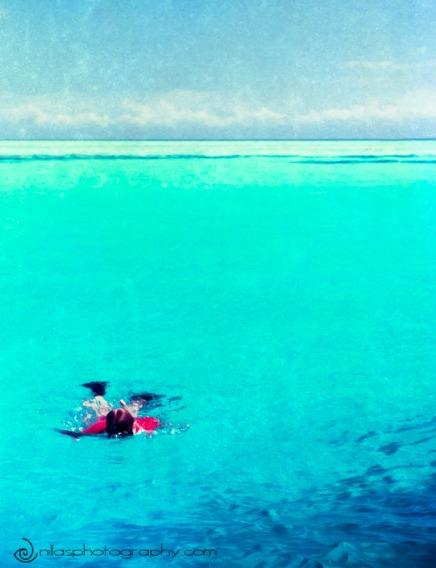 snorkelling, Cape Bedford, Cape Flattery, Lizard Island, Queensland, Oceania