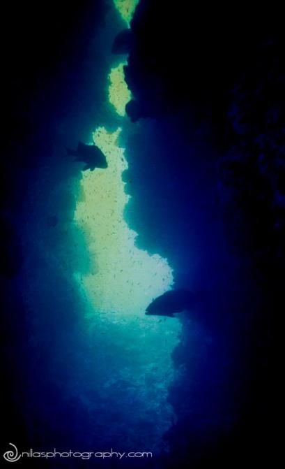 snorkelling, Townsville, sailing, Sydney, Australia, Oceania