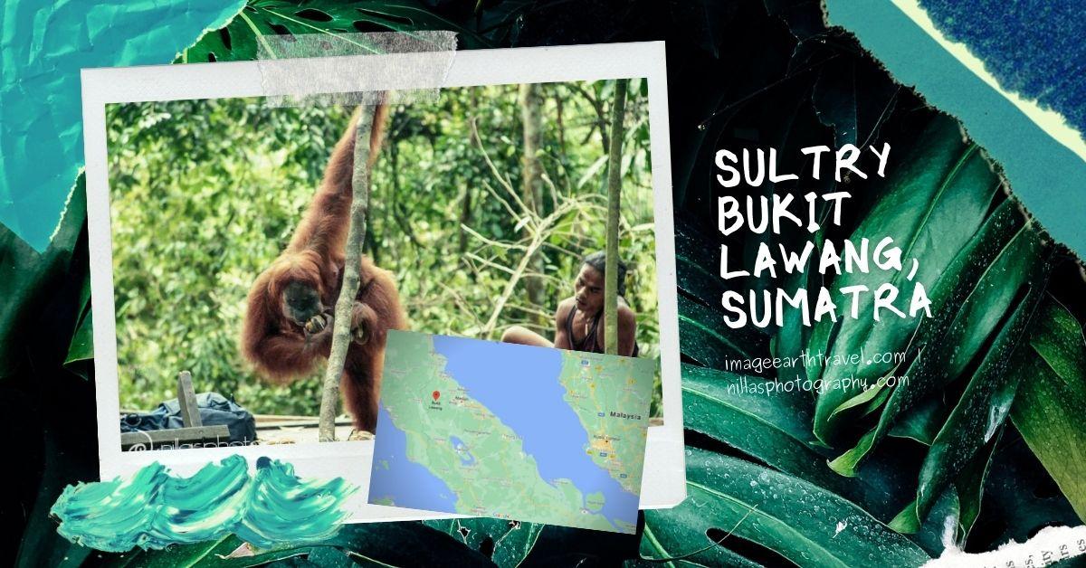 Bukit Lawang, Sumatra, Indonesia, SE Asia