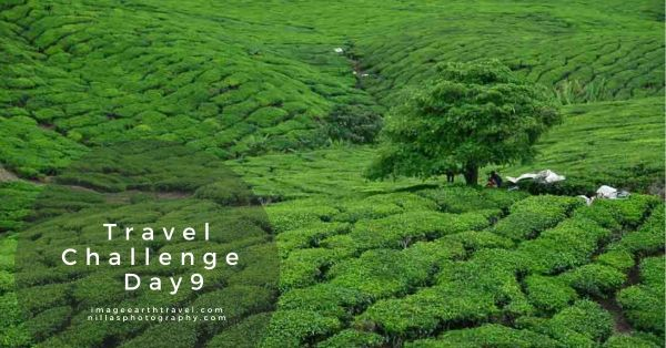 Travel challenge Day 9, Cameron Highlands, Malaysia, SE Asia