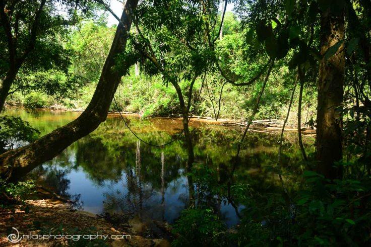 Taman Negara, Malaysia, SE Asia