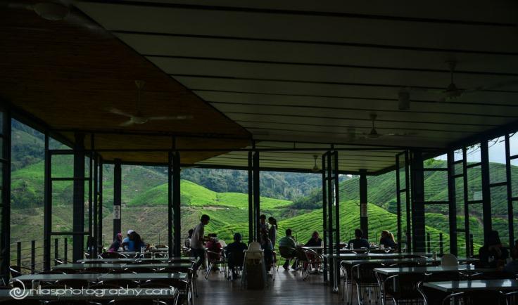 Tea plantation, Trekking, Cameron Highlands, Malaysia, SE Asia