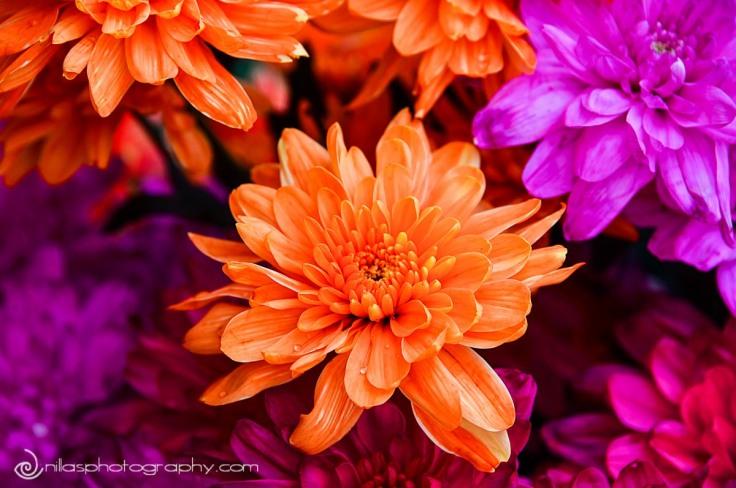 flowers, Georgetown, Penang, Malaysia, SE Asia
