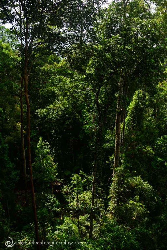 Taman Negara, Malaysa, SE Asia